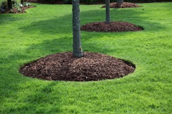 Commercial Bark & Mulch delivery and installation services of Grand Rapids Landscape Management