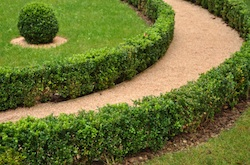 Shrub and Tree pruning services for residential customers of Grand Rapids Landscape management